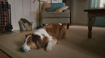Milk-Bone TV Spot, 'Ready, Set, Go' - Thumbnail 3