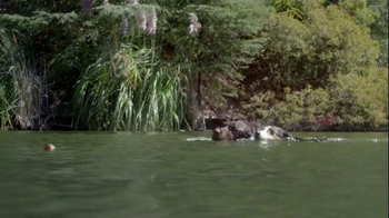 Purina Pro Plan TV Spot, 'If Your Dog Can Dream It: Swimmer' - Thumbnail 6