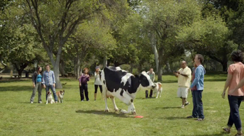 Cow in the Dog Park thumbnail