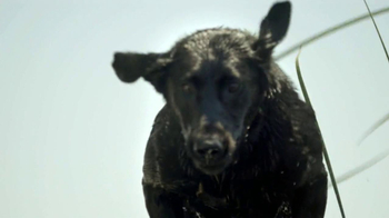 Purina Pro Plan TV Spot, 'If Your Dog Can Dream It: Soaring' - Thumbnail 4