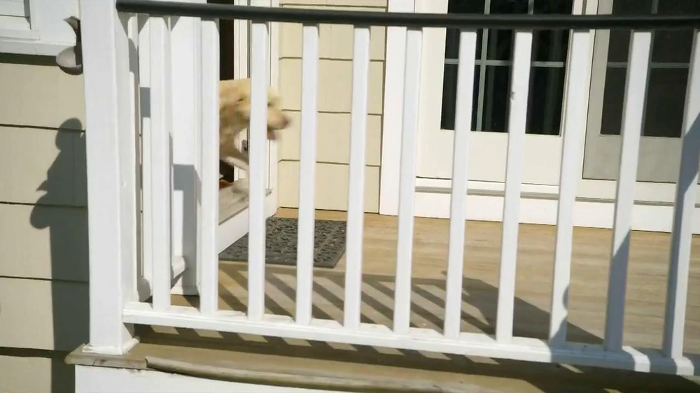 iams woof delights tv commercial real love   ispot tv