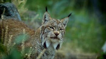 Blue Buffalo Wilderness TV Spot, 'Wild Cat' - Thumbnail 1