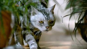 Blue Buffalo Wilderness TV Spot, 'Wild Cat' - Thumbnail 3
