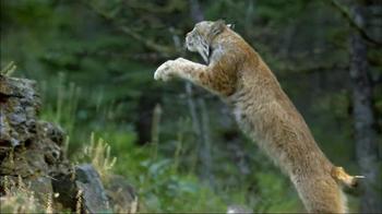 Blue Buffalo Wilderness TV Spot, 'Wild Cat' - Thumbnail 4