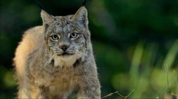 Blue Buffalo Wilderness TV Spot, 'Wild Cat' - Thumbnail 5