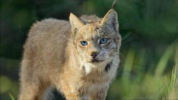 Blue Buffalo Wilderness TV Spot, 'Wild Cat' - Thumbnail 6