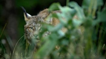 Blue Buffalo Wilderness TV Spot, 'Wild Cat' - Thumbnail 8