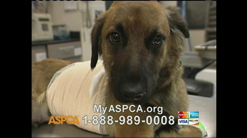 ASPCA TV Spot 'Silent Night' - Thumbnail 8
