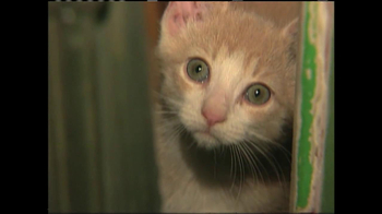 ASPCA TV Spot 'Silent Night' - Thumbnail 3