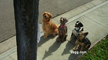 Tagg TV Spot, 'Lost Dogs' - 483 commercial airings
