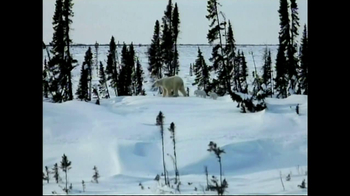 World Wildlife Fund TV Spot, 'Be the Voice Polar Bears'