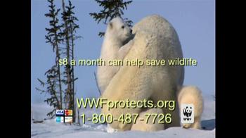 World Wildlife Fund TV Spot, 'Polar Bears: Look Closely'