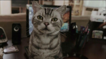 Iams TV Spot, 'Ziggy the Cat' - Thumbnail 4