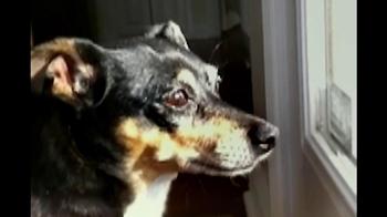 Purina ProPlan TV Spot, 'Great Dog' Song Tony Rogers - Thumbnail 4
