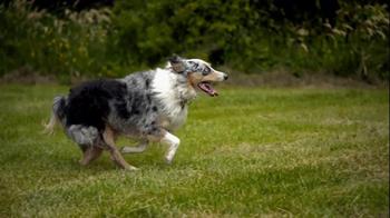 Purina ProPlan TV Spot, 'Great Dog' Song Tony Rogers - Thumbnail 5