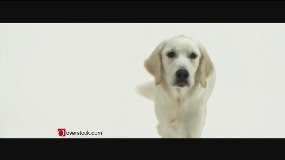 Overstock.com Pet Adoptions TV Spot - iSpot.tv