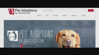 Pet Adoptions thumbnail