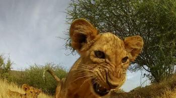 GoPro TV Spot, 'Lion Cub Roar'