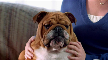 Blue Buffalo Blue Basics TV Spot, 'Rocky the Bulldog' - Thumbnail 3