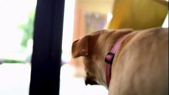 Pedigree TV Spot, 'Shelter Dogs' - Thumbnail 3