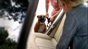 Pedigree TV Spot, 'Shelter Dogs' - Thumbnail 4