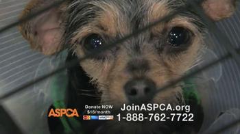 ASPCA TV Spot Featuring Eric McCormack