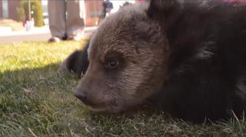 Washington State University TV Spot, 'Bear Research Center'