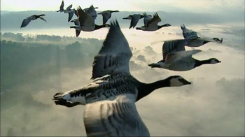 Magnificent Geese thumbnail