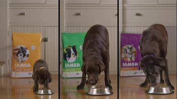 Iams TV Spot, 'A Boy and His Dog Duck' - Thumbnail 8