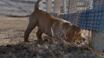 Budweiser Super Bowl 2014 TV Spot, 'Puppy Love' - Thumbnail 2