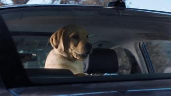 Budweiser Super Bowl 2014 TV Spot, 'Puppy Love' - Thumbnail 7