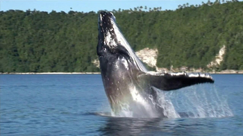 Pacific Life TV Spot For Years Go By Whale