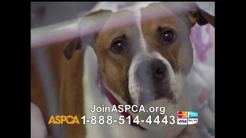 ASPCA TV Commercial For Neglect and Abused Animals - iSpot.tv Sad Animal Face