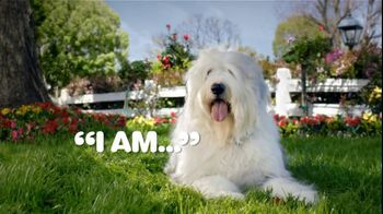 Iams TV Spot, 'Animal Protein To Eat Like Dogs'