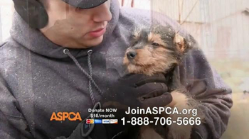 ASPCA TV Spot, 'This Winter' Featuring Allison Cardona - Thumbnail 7