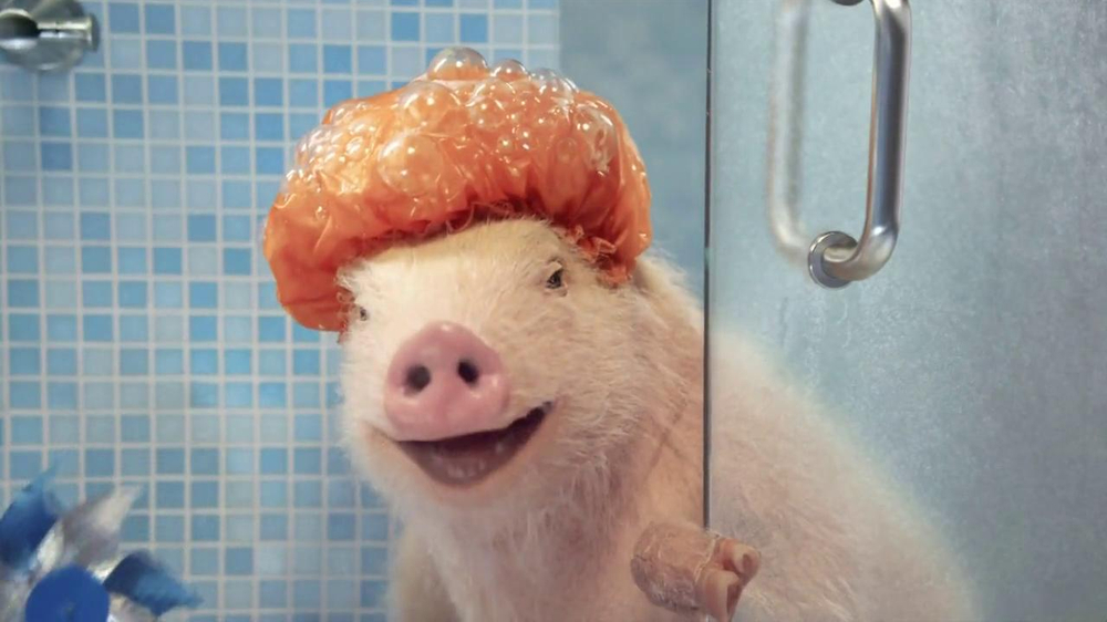 GEICO Mobile App TV Commercial, Shower Featuring Maxwell the Pig ...