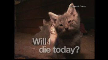 Humane Society TV Spot, 'Rescue Animals Now' Featuring Wendie Malick - Thumbnail 2