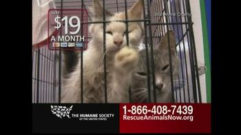 Rescue Animals Now thumbnail