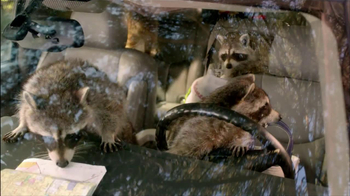 Road Trip and Raccoons thumbnail