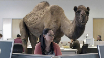 GEICO TV Spot, 'Camel on Hump Day' - Thumbnail 6