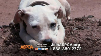 ASPCA TV Spot, 'Love is Real'