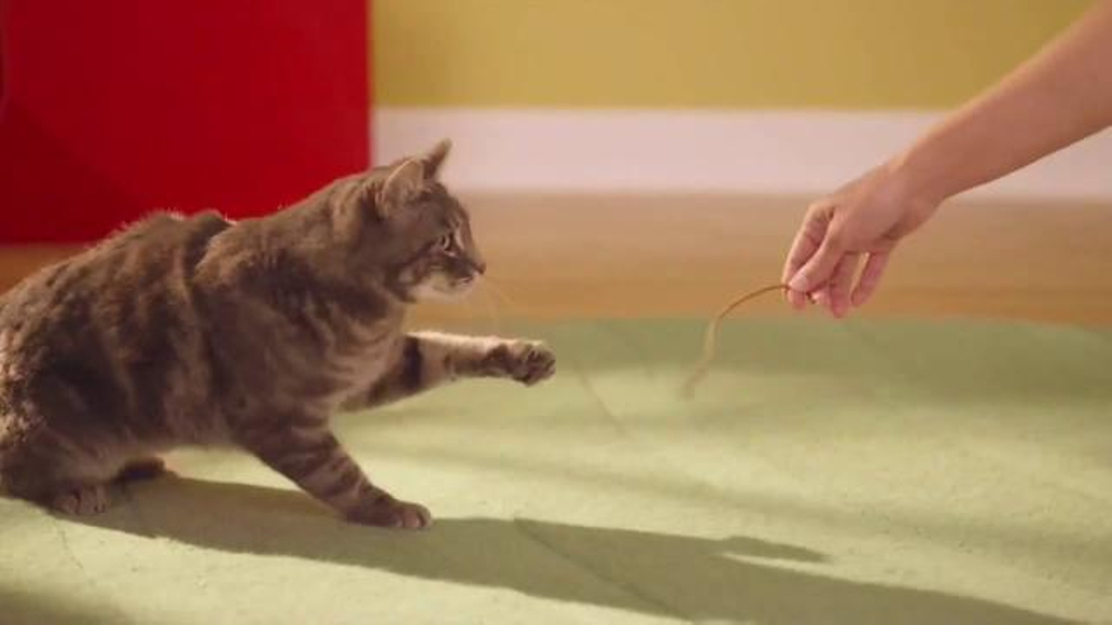 Friskies Pull N Play Tv Commercial Playhouse Ispot Tv