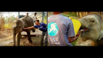 International Fund for Animal Welfare TV Spot