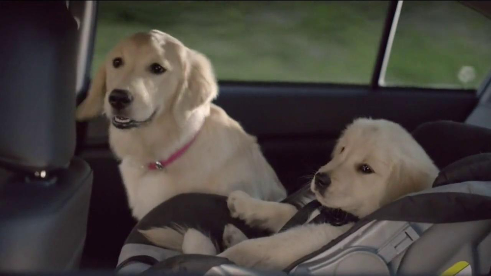 Subaru TV Commercial, 'Dog Tested' - iSpot.tv