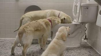 Subaru TV Spot, 'Dog Tested: Gas Station' - Thumbnail 7