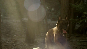 Purina Pro Plan TV Spot, 'If Your Dog Can Dream It: Fetch' - Thumbnail 8