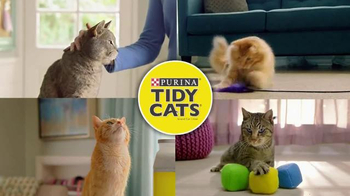 Purina Tidy Cats TV Spot, 'Every Home, Every Cat'