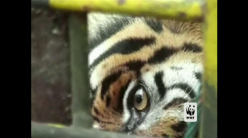 World Wildlife Fund TV Spot 'Poachers'
