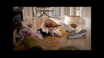 PetSmart TV Spot, 'Dog Types' - Thumbnail 3