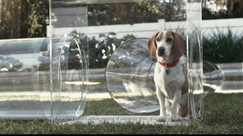 Trifexis TV Spot, 'Dog Tube'